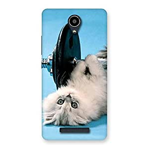 Cute Fit Cat Multicolor Back Case Cover for Redmi Note 2