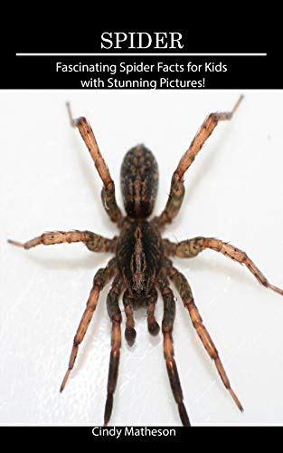 Spider: Fascinating Spider Facts for Kids with Stunning Pictures! (English Edition) (Baby Spider)