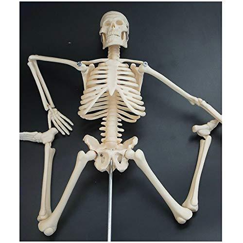 FXQ 45 cm Menschliches Skelett Modell - Flexible Mini Skeleton Modell Humanmedizin Skeletal Modell - für das Studium Anzeige Teaching Medical Modell, Wissenschaft pädagogischen Lehr Spielzeug