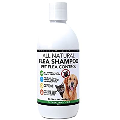 All Natural Flea Shampoo for Dogs & Cats | Lemongrass | 500ml | Powerful & Safe Formula | The Best Wash Treatment to Kill & Control Fleas Ticks & Lice by The Healthy Dog Co