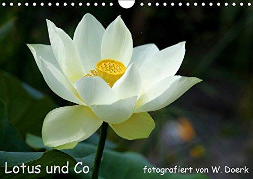 Lotus und Co (Wandkalender 2019 DIN A4 quer): Lotus - ein Symbol der Reineit (Monatskalender, 14 Seiten) (CALVENDO - Lotus Schatten