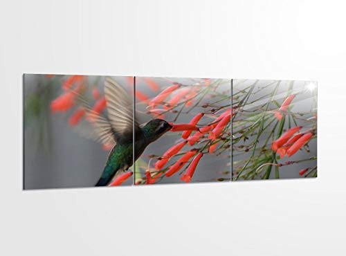 Acrylglasbilder 3 Teilig 150x50cm Kolibri kleiner Vogel Kolibris_ Acrylbild Bilder Acrylglas Wand Bild Kunstdruck 14?5476, Acrylglas Größe 6:BxH Gesamt 150cmx50cm
