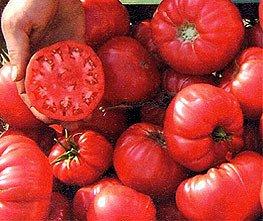 Bobby-Seeds BIO-Tomatensamen Olena Ukrainian Portion