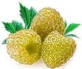 Bonsai Frutta Colorata Lampone pianta di gelso Black Berry in Vaso da Giardino Blackberry Sementes de frutas Raras 200 pc in Vendita: 6