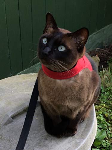 Mynwood Gatto Giaccaimbracatura Rosso Adulto Cat Escape Prova