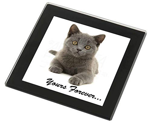 Advanta - Glass Coasters Silver Blue Cat ' Yours Forever' Glasuntersetzer mit schwarzem Rand Weihnachtsge