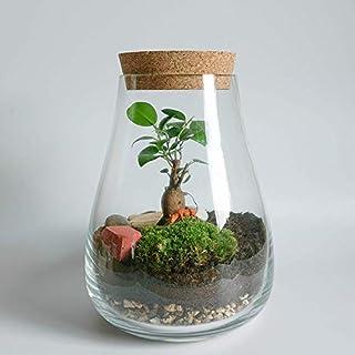 Concretelab&co Terrarium Kit with Glass Vase & Optional Bonsai Tree + Moss and Tools DIY Home Office Decor (Terrarium kit with Fitonnia & Moss)