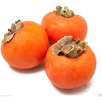Kaki, Kakibaum 10 Samen -Diospyros kaki- (Winterhart bis -15 C°)
