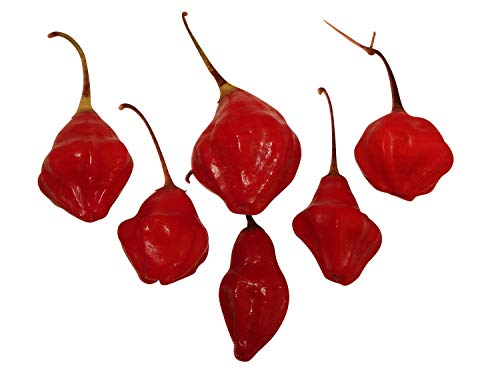Rainforest (Glocken-Lampion-Chili) 10 Samen