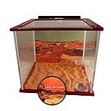 Antlife ANT Cube Mars (mit Gratis-Königin)   Ameisenfarm mit Messor barbarus