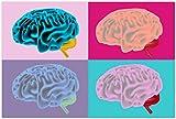 Wallario Poster - Menschliches Gehirn im Pop Art Stil in Premiumqualität, Größe: 61 x 91,5 cm (Maxiposter)