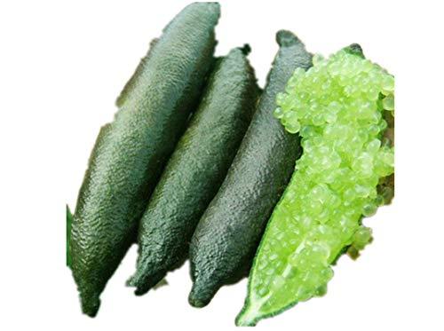 KINGDUO 20 Pcs/Pack Doigt Limes Agrumes Orange Graines Jardin Balcon Bonsai Fruit Des Semences D'Arbres Plantation-Vert