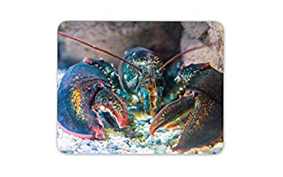 Blue Lobster Sea Fishing Ocean Life Mouse Mat Pad - Seafood Computer Gift #15124 by Destination Vinyl Ltd
