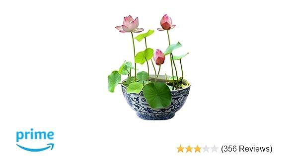 Snow Lotus Flower Sub Indo Streaming Best Flower Site