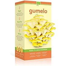 Kit de cultivo (Kit autocultivo) La seta lista para crecer - Pleurotus Ostreatus - Kit de cultivo en casa (champiñón) Mushroom - Amarillo Citrus