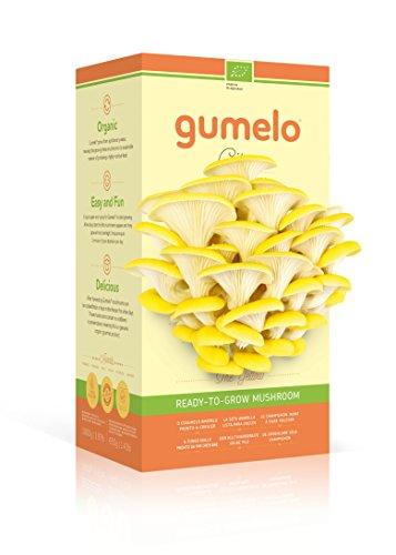 GUMELO Kit champignons Pleurotes BIO (Citrus jaunes) - Haut de gamme - Idée cadeau, plaisir d'offrir, pousse rapidement