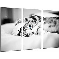 Cuadro Fotográfico Hipster Animal Gato Ojos Azules, Blanco y Negro Tamaño total: 97 x 62 cm XXL