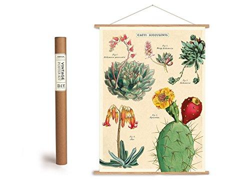 Vintage Poster Set mit Holzleisten (Rahmen) und Schnur zum Aufhängen, Motiv Kakteen, Kaktus, Sukkulente