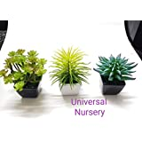 Beautiful Indoor/Natural Looking/Cactus, Sucullant, Aloe Vera, Bonsai Artificial/Home Décor Plant With Ceramic Pots For Table Top, Drawing Room, Dining Hall (3 In 1 Set)