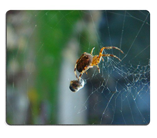 jun-xt-mousepad-spider-insetti-web-cibo-dettaglio-in-gomma-naturale-materiale-immagine-351541