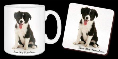 Border Collie Puppy mit