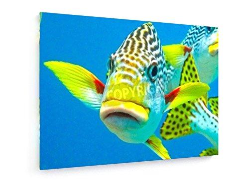 Eine diagonale gebändert Sweetlip stellt für die Kamera - 80x60 cm - Textil-Leinwandbild auf Keilrahmen - Wand-Bild - Kunst, Gemälde, Foto, Bild auf Leinwand - Künstler (Kamera Taucher Tauchen Unterwasser)