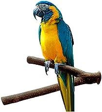 Toruiwa Papageien Spielzeuge Äste Standfuß Sitzstangen Holz Papageien Bad Dusche Pfote Stand für Vögel Papageien Wellensittich Nymphensittich 15cm