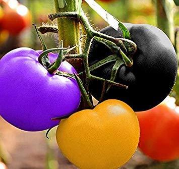 Shoppy Star Shoppy étoiles: 100 pcs non OGM Heirloom Seeds arc-en-Plant de tomate Graines de légumes biologiques pour la plantation