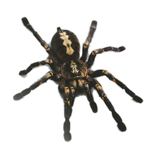 Babysbreath17 1Pcs / 2Pcs 3D-Spinnen-Aufkleber Lustige Auto-Kopf-Schwanz-Personality-Spinne Aufkleber-Abziehbild-Dekor-DIY Dekoration