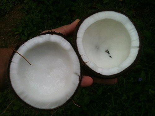 Aceite de Coco : Aceite Virgen de COCO: ACEITE DE COCO: ADELGAZA - DESINTOXICA de Nuestra Naturaleza para nosotros