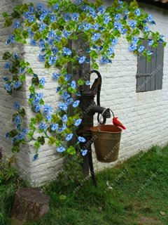 Fash Lady Echt Clematis Zwiebeln, (Nicht Clematis Samen), Bonsai Blumenzwiebeln Kletterpflanze mehrjährige Blumen Clematis Bulbous Root 1 Stück 5