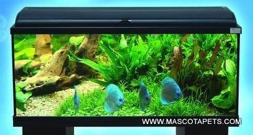 Acuario Aquadream 100 de 100x30x40 con luz y filtro