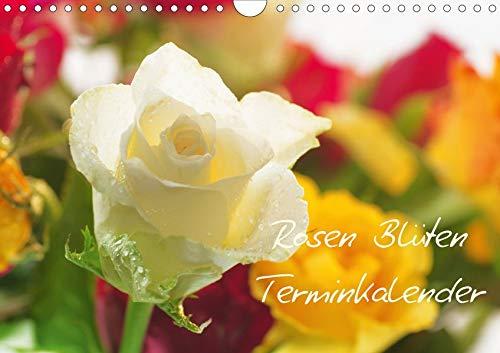 Rosen Blüten Terminkalender (Wandkalender 2020 DIN A4 quer): Ein Terminkalender in dem die Schönheit und die Vielfältigkeit der Rosen zu sehen ist (Geburtstagskalender, 14 Seiten ) (CALVENDO Natur)