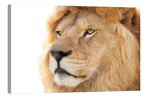 fototapete nachleuchtend Wandbilder Startoshop, nachleuchtende Leinwandbilder oder Selbstklebende Fototapete, EIN Löwe Wanddeko, 40 cm x 60 cm
