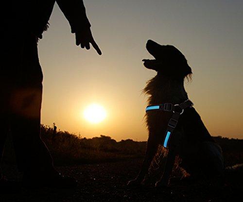 PRECORN lampadina LED Cani Stoviglie Stoviglie Pettorina sicurezza Stoviglie Stoviglie Blu, Taglia S