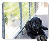 Gaming-Mauspads, Mauspad, Dog Domestic Labrador Home Windows Teppiche Boden