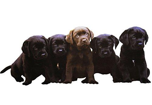 großes XL Fensterbild - Hunde Welpen - BEIDSEITIG bedruckt & selbstklebend - statische Haftung - Wiederverwendbar ! Tattoo Zimmer - Fenstersticker / Fensterbilder - Hund Tiere