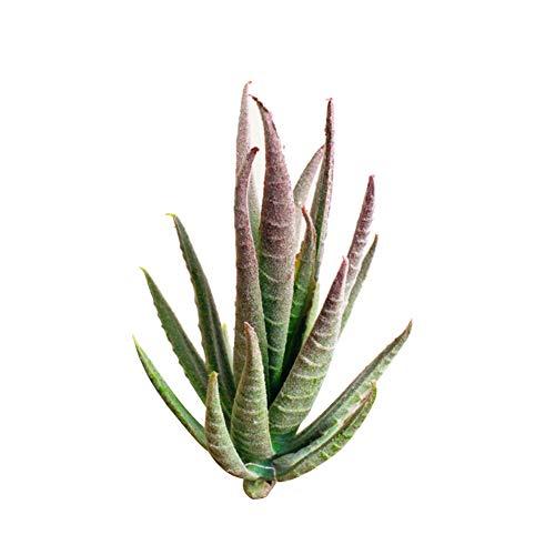 6SlonHy Lebendige Farbe Künstliche Blume Ausbleichen Mini Sukkulente Hochzeit Home Desk Bonsai Decor 1 Stück 5# Regulär