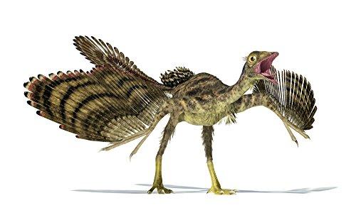 Leonello Calvetti/Stocktrek Images – Archaeopteryx dinosaur on white background. Photo Print (91,44 x 56,39 cm)
