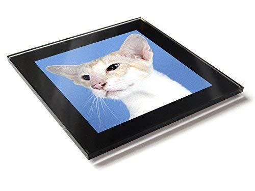 Siam Creme Tabby Katze Kätzchen Premium Glastisch Untersetzer mit Geschenkverpackung -