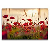 Premium Textil-Leinwand 120 x 80 cm Quer-Format Mohnblumen im Abendlicht | Wandbild, HD-Bild auf Keilrahmen, Fertigbild auf hochwertigem Vlies, Leinwanddruck von Lain Jackson