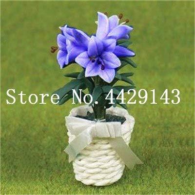 prime vista 50 teile/beutel Seltene Lilie Bonsai, Mini Bonsai Lilie Blume, Angenehmen Duft, Anlage für Haus & amp; Garten die angehende Rate 97%: 1