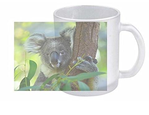 Koala 10fl oz tasse en verre transparent Demi-pinte #CLEAR12