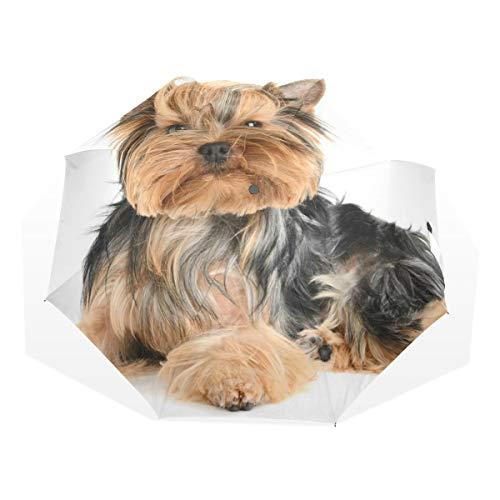 Regenschirm Netter Yorkshire Terrier isoliert 3 faltet leichtes Anti-UV - Yorkshire 3 Licht