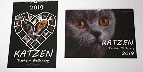 Katzenkalender 2019 zu Gunsten Tierheim Wollaberg | DIN A3 Monatskalender (Fotokalender) mit Katzen | Hochformat oder Querformat (Querformat)