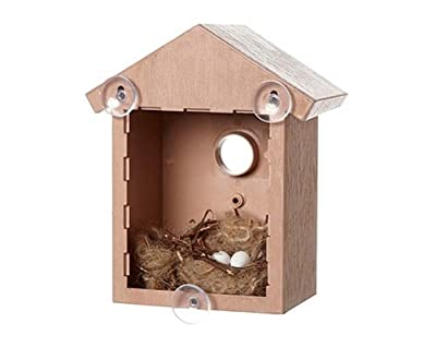 Window Nesting Bird Box Birdhouse Birds Eggs Chicks Hatching Nest Observe Wooden