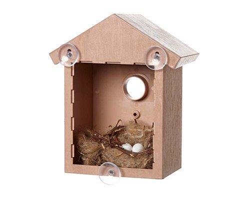 Fenster, Nistkasten, Vogelhaus Vogel Vögel beobachten schlüpfende Eier Küken-Set aus Holz
