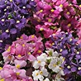 PLAT FIRM: 40+ Poesia Mix Nemesia Profumino/Annu Seeds