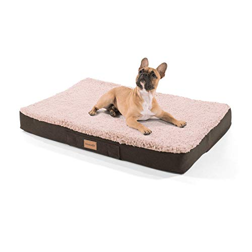 brunolie Balu Hundebett, waschbar, orthopädisch und Rutschfest, Hundekissen mit kuscheligem Plüsch, Größe M, Beige