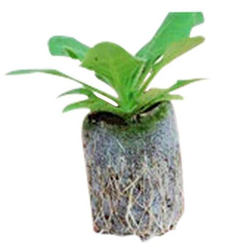 toogoor-30pcs-25mm-peat-planting-cuttinggarden-suppliesseed-startervegetable-seeds-nursery-block